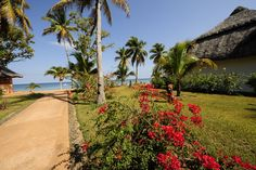 Es blüht in Nosy Be, #Madagaskar  Flowers in Nosy Be, #Madagascar    © Easyvoyage
