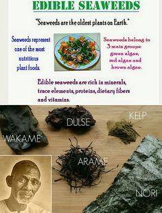 Sebi sea vegetables + Hijiki – What Is Sea Moss? Sea Moss Benefits and Side Effects Dr Sebi Nutritional Guide, Dr Sebi Diet, Edible Seaweed, Dr Sebi Recipes, Smoothies, Alkaline Diet Recipes, Sea Vegetables, Veggies, Health Cleanse