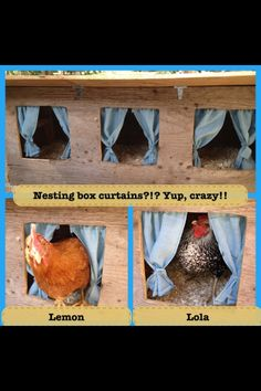 Nesting Box For Chickens Chickens Pinterest