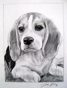 Are you interested in a Beagle? Well, the Beagle is one of the few popular dogs that will adapt much faster to any home. Art Beagle, Beagle Puppy, Puppy Drawing, Cute Beagles, Pet Dogs, Pets, Doggies, Pet Breeds, Dog Wallpaper