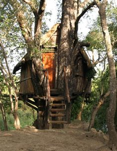 Marc's Treehouse Lodge  South Africa