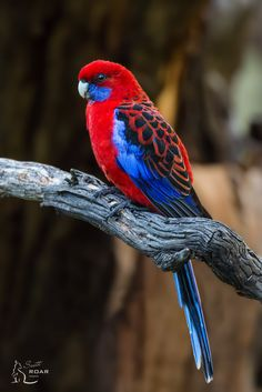 drag to resize or shift+drag to move Pretty Birds, Love Birds, Beautiful Birds, Animals Beautiful, Polo Sul, Polo Norte, Colorful Animals, Colorful Birds, Cute Animals