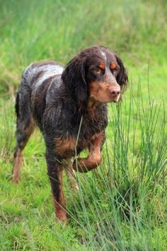 55 Best Top Dogs images in 2015   Doggies, Dog breeds
