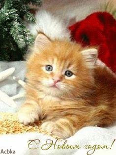 Christmas kitten gif