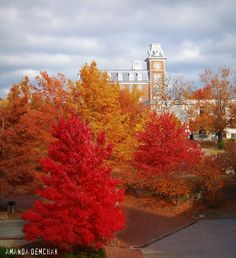 Fayetteville, AR - Fall at the University of Arkansas - a beautiful sight.