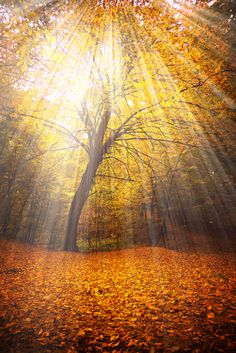 Gorgeous use of light. #trees #forest #fall #leaves #photography