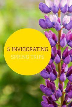 TRAVEL IDEAS:  5 Invigorating Trips to Take This Spring   #travel #spring