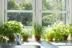 inside herb planter - Google Search