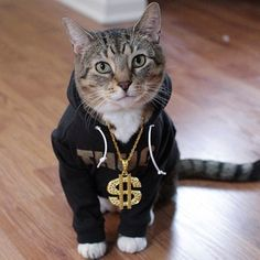 Glorious Gallery of Cats In Hoodies