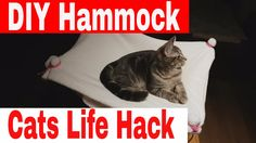 How to create a hammock for your cats. Watch Inspiring DIY Projects For Cats and give your cat a. Funny Cat Videos, Funny Cats, Funny Animals, Cute Animals, Diy Cat Hammock, Youtube Cats, Cat Hacks, Right Meow, Popular Toys