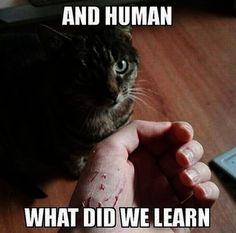 Fantastic... Funny Cat Photos Pinterest ;-D