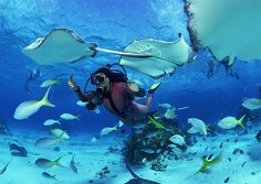 Hot Women Scuba Diving | When selecting a dive operator, one perk that may interest you is that ...