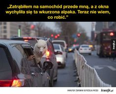 Dziwne sytuacje przedstawione na zdjęciach Very Funny Memes, Wtf Funny, Hahaha Hahaha, Polish Memes, Its Time To Stop, Life Humor, Animal Memes, Best Memes, True Stories
