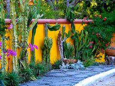 Succulent and cacti garden