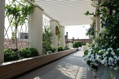 An Italian terrace with white pergola and climing wisteria, on Gardenista.