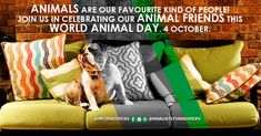World Animal Day - Margate Furnishers Custom Wood Furniture, October 4th, We Are A Team, Pet Day, Animals Of The World, Kinds Of People, This Is Us, News