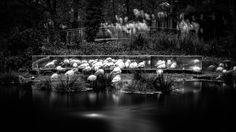 The Pink Flamingos Artis, the Amsterdam Zoo | John Cavacas Photography
