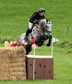 Honour Cruise | Irish Sport Horse | AES Stallion at Stud | Harthill Stud