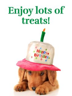Send Free Puppy in a Hat - Happy Birthday Card for Girls to Loved Ones on Birthday & Greeting Cards by Davia. It's free, and you also can use your own customized birthday calendar and birthday reminders.