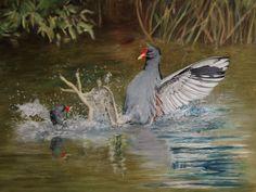 Moorhens edited for Painters Online Ink Pen Drawings, Bird Drawings, Bird Paintings, Wildlife Art, Picture Sizes, Painters, Painting & Drawing, Artist, Pictures