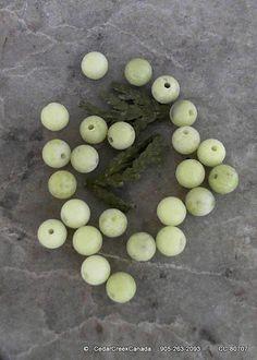 Natural Phoenix Jade 6mm Round Gemstone Beads  by CedarCreekCanada