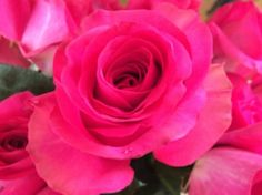 www.springintheair.com ROSES cut and delivered the same day direct from the grower in Columbia!