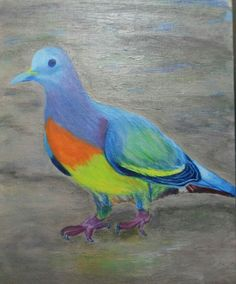 Acrylic pigeon painting