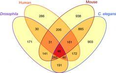 In wide range of species, longevity proteins affect dozens of the same genes http://www.sciencetotal.com/news/2016-04-in-wide-range-of-species-longevity-proteins-affect-dozens-of-the-same-genes/