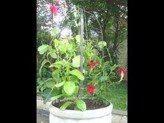 Vaso Ideal Para Cada Planta   Flores - Cultura Mix