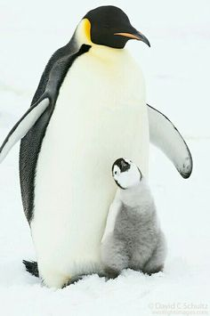 145 Best Penguin images in 2019  8256ccaac