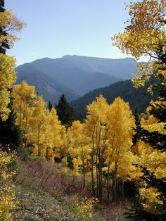Scenic Views of the Bridger-Teton National Forest