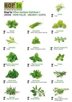 herbes ... Pour des grillades, des salades ou des sauces, en entrée, en plat ou en dessert : les herbes fraîches parfument à merveille les plats estivaux !  Découvrez un tableau récapitulatif des herbes aromatiques – et des exemples d'utilisations – que vous pourrez trouver à Hop'la                                                                                                                                                                                 Plus