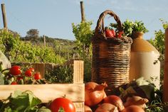 Spring at its best in Malta! | Merill Eco Tours