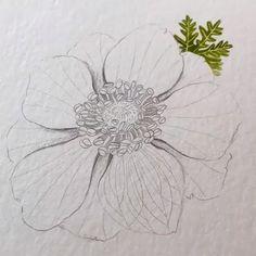 Flower Drawing Tutorials, Flower Sketches, Art Sketches, Art Drawings, Art Tutorials, Pencil Drawings Of Flowers, Watercolor Flowers Tutorial, Watercolour Tutorials, Flower Watercolor