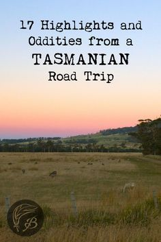 Here are a few of the highlights and oddities you may encounter during a four day Tasmanian road trip in Australia. The island state is worth a visit.