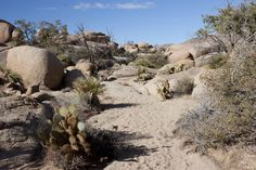 This short hike to a beautiful jumble of rocks and plants is one of Joshua Tree National Park's best kept secrets Joshua Tree National Park, National Parks, Joshua Tree Hikes, Pine City, Mountain Trails, Best Hikes, Mount Rushmore, Hiking, Explore