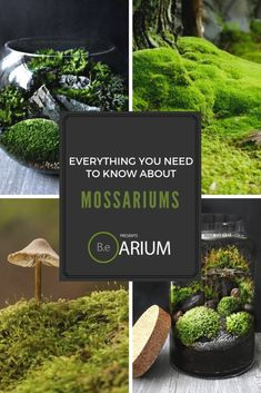 Mossarium Complete Care Guide & How To Build Moss garden, Moss terrarium, Terrarium diy, Growing Terrarium Diy, Terrarium Wedding, Gecko Terrarium, Growing Moss, Floating Plants, Paludarium, Vivarium, Home Vegetable Garden, Hardy Plants