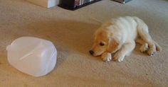 Making your own puzzles at home will save you some dough, and your dog will have just as much fun!