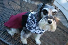 The Bohemian Bow Wow 'The Sophie' dog warmer dog coat medium on Etsy, $32.00