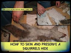 How To Skin And Preserve A Squirrels Hide, bushcraft, shtf, clothing, fur, how to, tutorial, survival, prepping, preparedness,