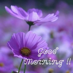Latest good morning images with flowers ~ WhatsApp DP, Love DP, DP Images, WhatsApp DP For Girls Good Morning Cards, Cute Good Morning, Good Morning Texts, Morning Thoughts, Good Morning Picture, Good Morning Messages, Good Morning Greetings, Morning Quotes, Good Day Images