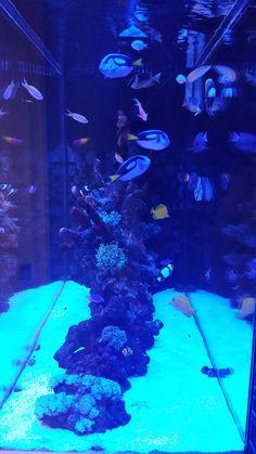 Aqua Creations - Custom Aquarium and Fish Tanks Design, Installation and Maintenance in NY, NJ and PA Saltwater Aquarium Setup, Saltwater Fish Tanks, Tropical Fish Tanks, Aquarium Design, Marine Aquarium, Reef Aquarium, Aquarium Fish Tank, Freshwater Aquarium Fish, Aquariums
