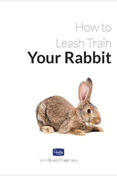 Tips to leash train your pet rabbit