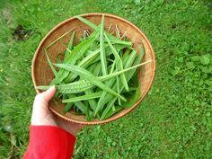 Jitrocel je nenápadnou bylinkou, která se ovšem již od pradávna nazývá Garden Hose, Health Benefits, Life Is Good, Food And Drink, Herbs, Outdoor, Medicine, Diet, Syrup