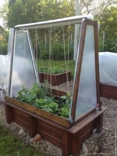Raised Garden Beds, Raised Beds, Backyard Projects, Diy Projects, Garden Plants Vegetable, Garden Inspiration, Home And Garden, Vegetables, Green
