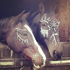 29 horse Halloween costumes that are next-level genius: Ballerinas Horse Halloween Costumes, Cat Costumes, Horse Skeleton Halloween, Horse Halloween Ideas, Costume Ideas, All The Pretty Horses, Beautiful Horses, Horse Love, Horse Girl