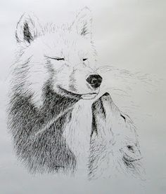 Pen and ink: White wolves