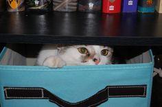 Peek-a-Boo...