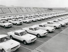 A fleet of Carroll Shelby Ford Mustang GT350 cars in 1966. Awesome pic!