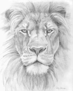 Rhino Front View Drawings | front view lion pencil pictures